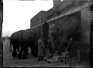 olifanten stappen uit de trein